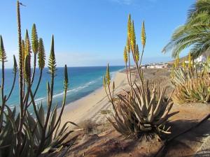 Urlaub auf Fuerteventura buchen